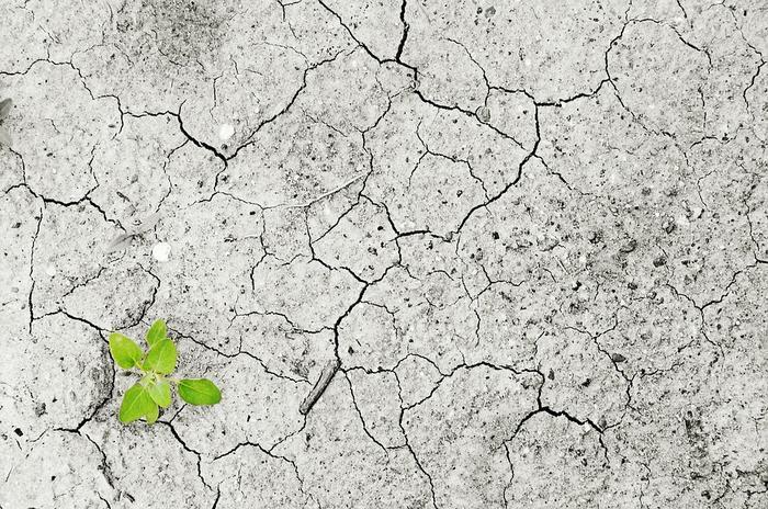 Laura Burgers: over de mondiale revolutie van klimaatzaken